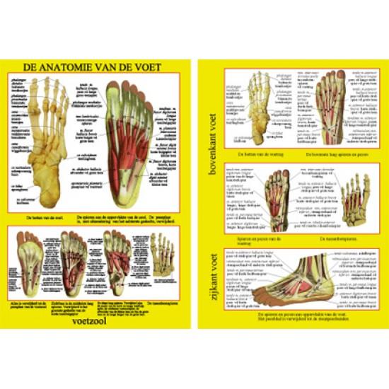 Anatomische Kaart A4 Voet
