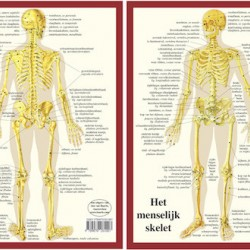 Anatomische Kaart A4 Skelet