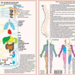 Anatomische Kaart A4 Wervelkolom