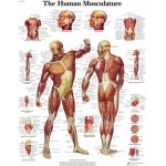 Anatomie Poster (26)