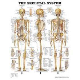 Poster 3D/relief 74x54cm skelet