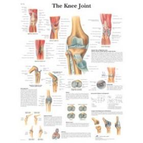 Poster Het Kniegewricht (Dubbelzijdig Gelamineerd)