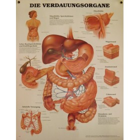 Poster Verteringsstelsel (Duitstalig)