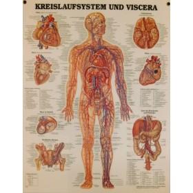 Poster Bloedsomloop (Duitstalig)